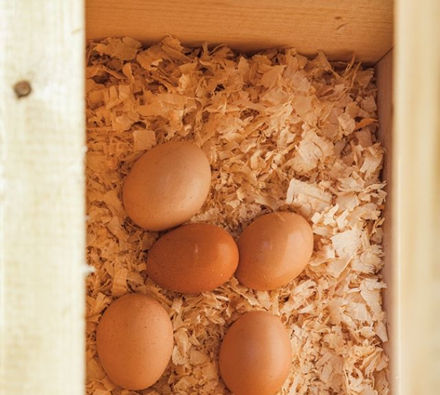 inside_nestbox_chickencoop_quakerstyle